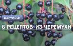 Черемуховая настойка рецепт
