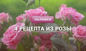 Настойка из лепестков роз рецепт